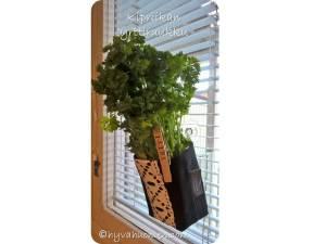Löysin Toivolan Vanhalta Pihalta Kipriikan hauskan yrttiruukun, joka kiinnitetään ikkunaan. - I´m testing this fun herb pot from Kipriikka. It´s attached to the window with a suction cup.